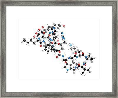 Afamelanotide Drug Molecule Framed Print by Molekuul