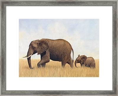 African Elephants Framed Print by David Stribbling