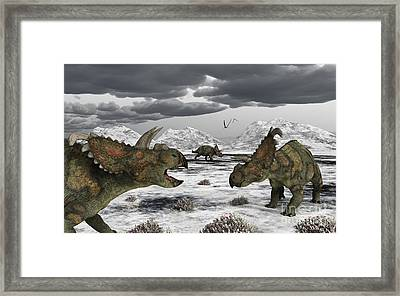 Albertaceratops During Their Winter Framed Print by Mark Stevenson
