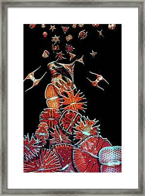 Algae Framed Print by Igor Siwanowicz