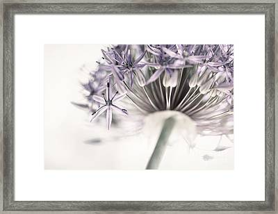 Allium Flower Framed Print by Elena Elisseeva