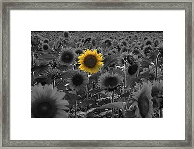 Alone Framed Print by Andrea Galiffi