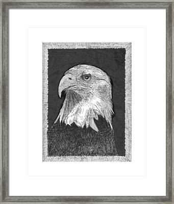 American Bald Eagle Framed Print by Jack Pumphrey