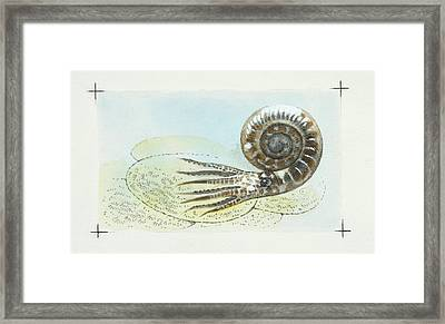 Ammonite Framed Print by Deagostini/uig