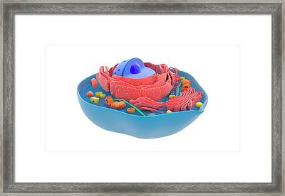 Animal Cell Framed Print by Science Photo Library