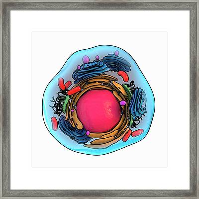 Animal Cell Structure Framed Print by Laguna Design