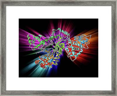 Anthrax Lethal Factor Molecule Framed Print by Laguna Design