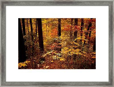 Appalachian Fall Framed Print by Phyllis Peterson