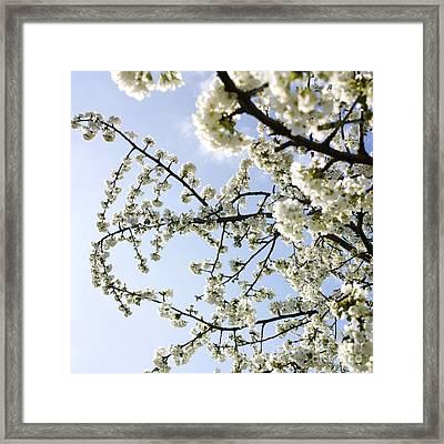 Apple Tree Framed Print by Bernard Jaubert