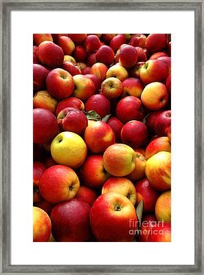 Apples Framed Print by Olivier Le Queinec
