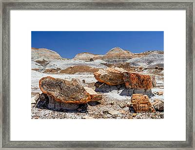 Arizona Petrified Forest National Park Framed Print by Bob and Nadine Johnston