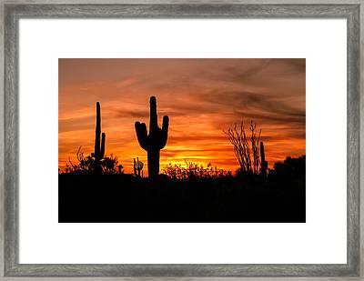 Arizona Saguaro Cactus Sunset Framed Print by Michael J Bauer