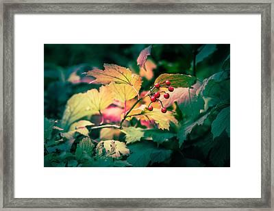 Arrowwood Berries - Featured 3 Framed Print by Alexander Senin