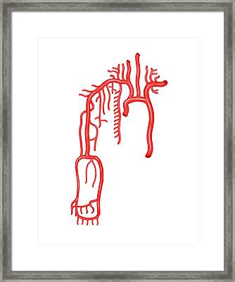 Arterial System Of The Upper Body Framed Print by Asklepios Medical Atlas