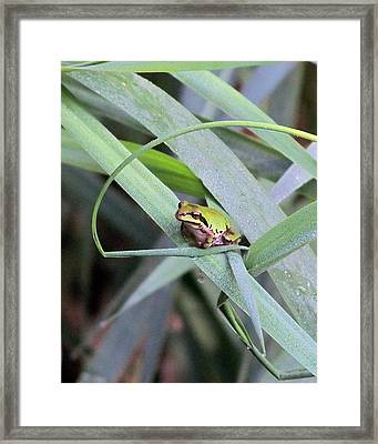 At The Crossroads Framed Print by I'ina Van Lawick