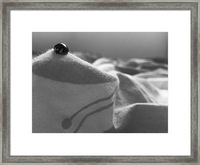 At The Top Framed Print by Lucy D