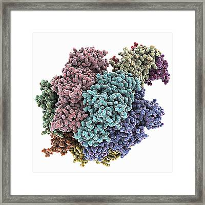 Atpase Molecule Framed Print by Science Photo Library
