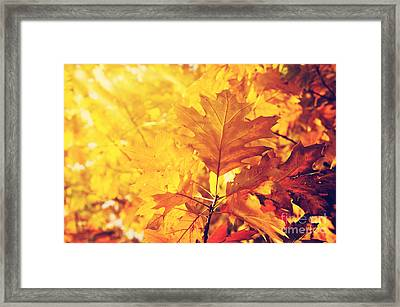 Autumn Leaves Framed Print by Jelena Jovanovic
