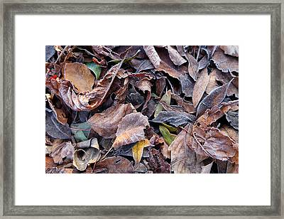 Autumn Leaves Framed Print by Mark Severn