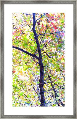 Autumn Leaves Framed Print by Scott Cameron