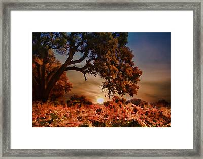 Autumn Vineyard Framed Print by Stephanie Laird