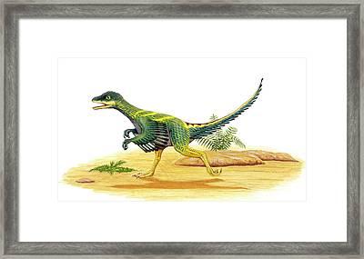 Avimimus Dinosaur Framed Print by Deagostini/uig