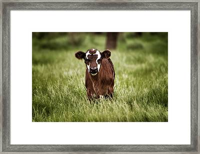Baby Framed Print by Kimberly Danner
