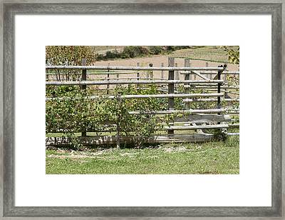 Bamboo Fence In A Pasture Framed Print by Robert Hamm