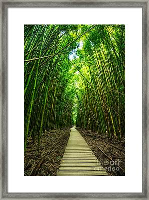 Bamboo Forest Framed Print by Jamie Pham