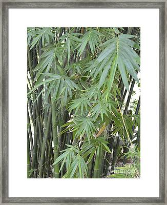 Bamboo 2 Framed Print by To-Tam Gerwe