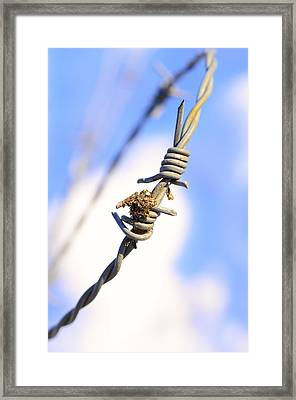 Barb Wire Framed Print by Toppart Sweden