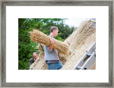 Barn Being Rethatched In Dorset Framed Print by Ashley Cooper