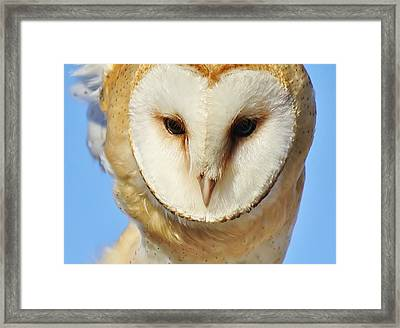 Barn Owl Up Close Framed Print by Paulette Thomas