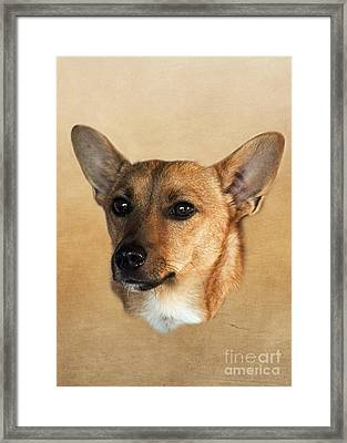 Barney Framed Print by Linsey Williams