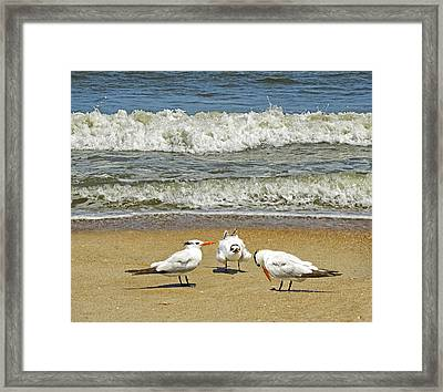 Beach Birds Framed Print by Steven  Michael