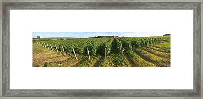 Beaujolais Vineyard, Montagny Framed Print by Panoramic Images