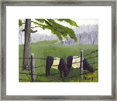 Belted Galloway Cows In Rockport Maine Framed Print by Keith Webber Jr