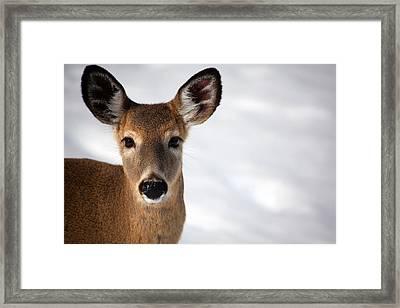 Big Ears Framed Print by Karol Livote