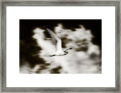 Bird Flying In The Clouds Framed Print by Jorgo Photography - Wall Art Gallery