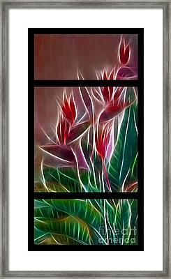 Bird Of Paradise Fractal Framed Print by Peter Piatt