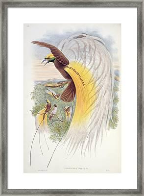 Bird Of Paradise Framed Print by John Gould