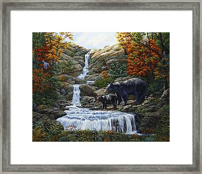 Black Bear Falls Framed Print by Crista Forest