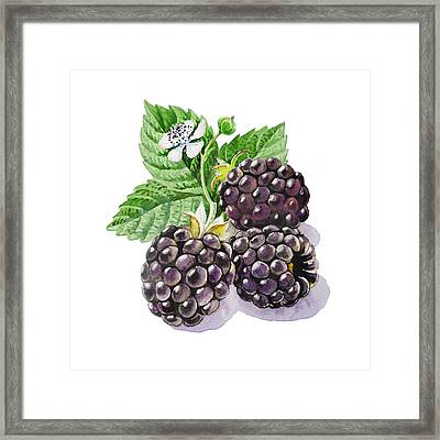 Artz Vitamins Series The Blackberries Framed Print by Irina Sztukowski