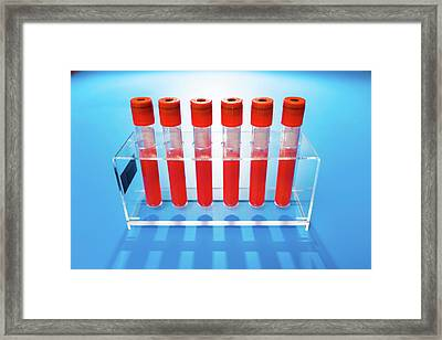 Blood Samples In Tubes Framed Print by Wladimir Bulgar