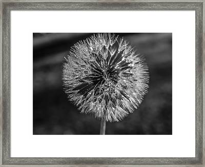 Blow Framed Print by Steven  Taylor