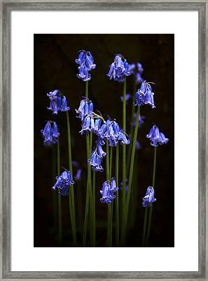 Blue Bells Framed Print by Svetlana Sewell