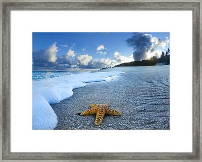 Blue Foam Starfish Framed Print by Sean Davey