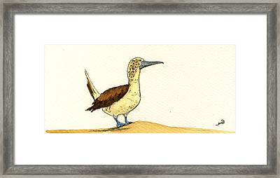 Blue Footed Booby Framed Print by Juan  Bosco
