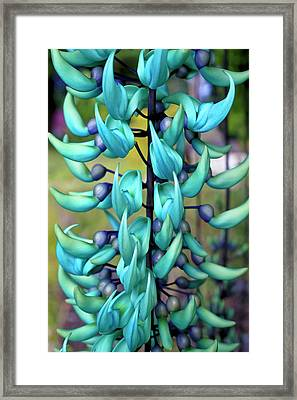 Blue Jade Plant  Hawaii, United States Framed Print by Scott Mead