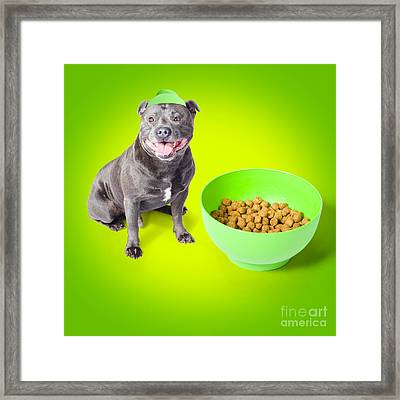 Blue Staffie With His Bowl Of Food Framed Print by Jorgo Photography - Wall Art Gallery